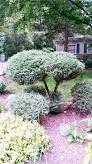 landscape trimmed shrubs