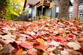 landscape fallen leaves